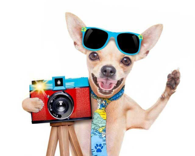 How to Start a Pet Photography Business | Cashvista
